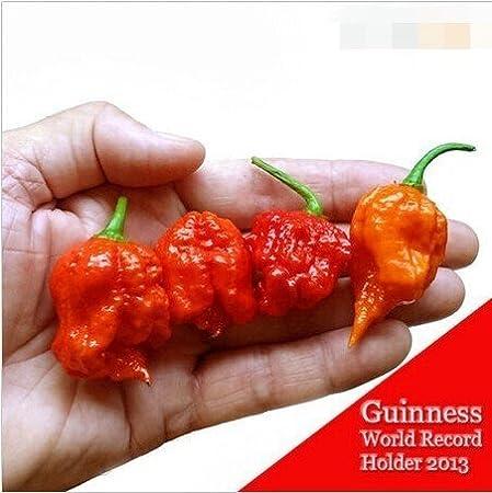 100Pcs//Pack Seeds 100/% Genuine Fresh Rare Trinidad Moruga Scorpion Pepper Seeds
