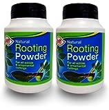 Doff® - Ormoni radicanti in polvere, 75 g, aiuta a crescere radici nuove e promuove radici forti e sane, 2 pezzi