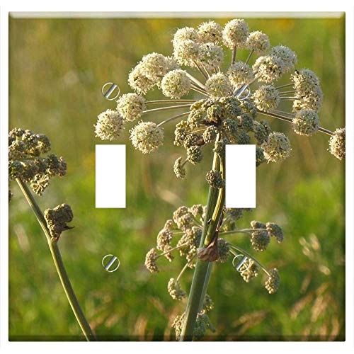 Switch Plate Double Toggle - Angelica Weed Meadow Summer Nature Plant ()