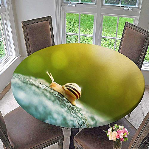 Mikihome Modern Table Cloth A Snail Climbing Rock Indoor or Outdoor Parties 47.5