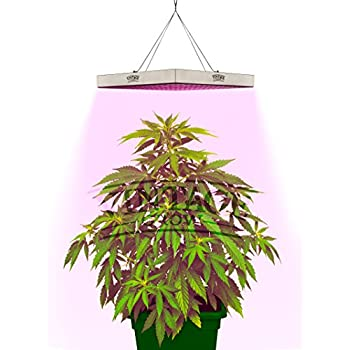 Amazon Com Kyson Led Grow Lights Bulb Plant Lamp 48pcs