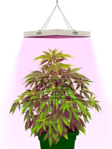 Indoor Led Grow Light Reviews