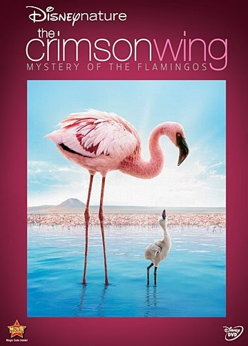 imson Wing - Mystery of Flamingos ()