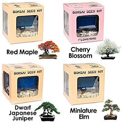 Eve's Bonsai Seed Kit Special 3-for-4 Bundle: Red Maple, Cherry Blossom, Japanese Juniper, and Miniature Elm. Complete Kits to Grow Bonsai from Seed. Special Price of 3 for 4 kits