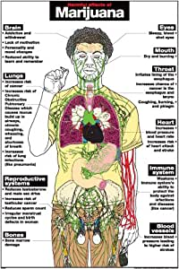 Adverse Health Effects of Marijuana Use