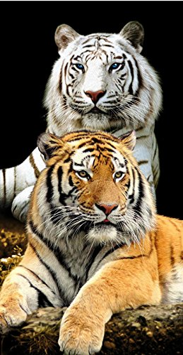 Color blanco y tigre de Bengala gatos Terry toalla de playa/baño (: Amazon.es: Hogar