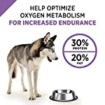 Purina Pro Plan SPORT Formula Dry Dog Food 10