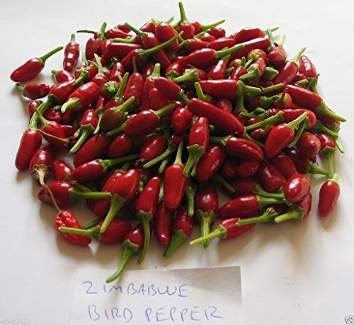 zimbabwe-birds-eye-chili-seeds-capsicum-annum-very-hotheirloom-chile-pepper-