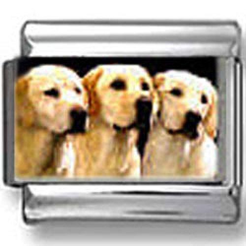 Labrador Retriever Dogs Photo Italian Charms
