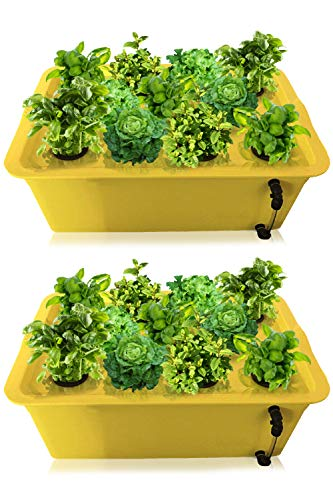 DWC Hydroponics Growing System 2Pack - Medium Size Kit w/Airstone, Bucket, Air Pump, Rockwool - Best Indoor Herb Garden for Cilantro, Mint - Complete Hydroponic Setup (15% Off 2 Pack 11 Sites)