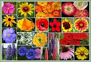 1 TBSP MIXED WILDFLOWER (30 Kinds!) Flower Seeds CombSH *Flat Ship Rate
