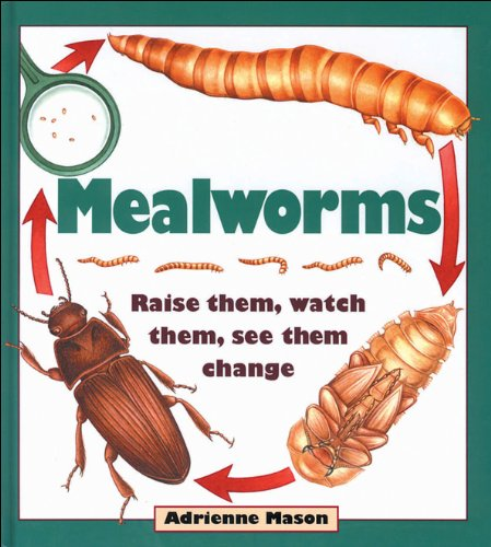 Mealworms: Raise them, watch them, see them change