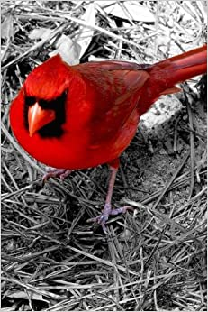 Book Red Cardinal Isolated on Black and White Background, Birds of the World: Blank 150 page lined journal for your thoughts, ideas, and inspiration