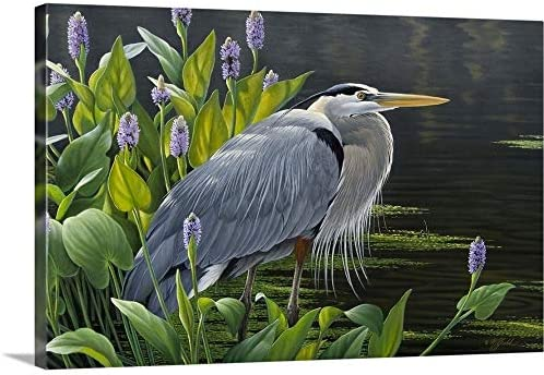 Biding Time Great Blue Heron Canvas Wall Art Print