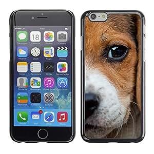 Estuche Cubierta Shell Smartphone estuche protector duro para el teléfono móvil Caso Apple Iphone 6 Plus 5.5 / CECELL Phone case / / Beagle Puppy Baby Dog Eye Animals Pet /