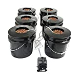 HTG Supply Bubble Brothers DWC Hydroponic System