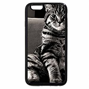 iPhone 6S / iPhone 6 Case (Black) Cat
