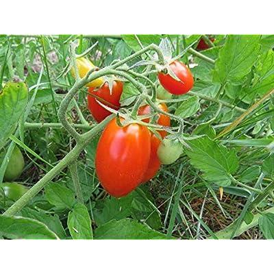 Organic Juliet Grape Tomato Seeds F1 Hybrid 500 Bulk Seeds : Garden & Outdoor