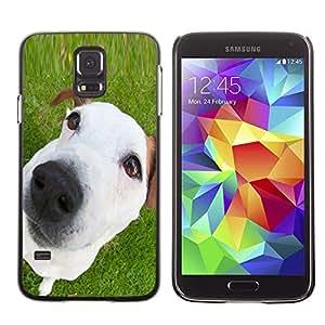 TopCaseStore / la caja del caucho duro de la cubierta de protección de la piel - Jack Russell Mutt Mongrel White Puppy - Samsung Galaxy S5 SM-G900