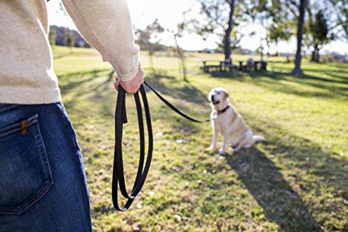 The Company of Animals CLIX Recall Training Line 10m 5