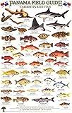 Panama Caribbean Reef Fish Identification Guide