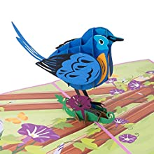 Paper Love Bluebird Pop Up Card, 3D Popup Greeting Cards, for Mothers Day, Spring, Fathers Day, Graduation, Birthday, Wedding, Anniversary, Thank You, Get Well, All Occasion