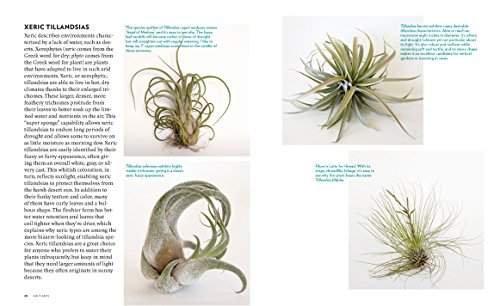 Air Plants: The Curious World of Tillandsias by Workman Publishing/Timber Press (Image #4)