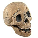 Myard Fireproof Imitated Human Fire Pit Skull Gas Log for NG, LP Wood Fireplace, Firepit, Campfire, Halloween Decor, BBQ (Qty 1, Brown)