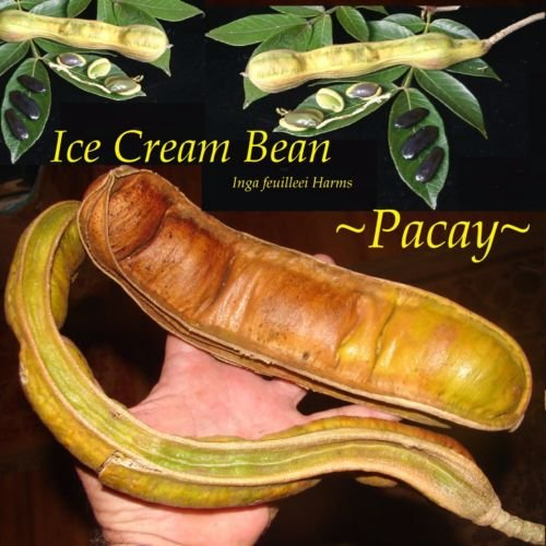 ice cream bean - 9