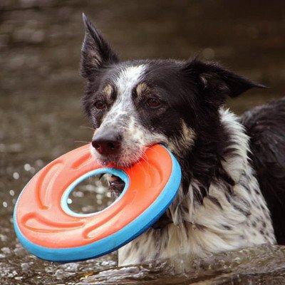 Chuckit Zipflight Frisbee Medium 21cm