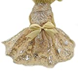 Lace Embroidered Dog Puppy Luxury Bow Dress Pet Cat Dog Tutu Skirt Princess wedding Dress Chihuahua Summer Dog Clothes Bride Costume (XS - champagne)