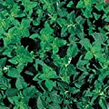 Park Seed Greek Oregano Seeds