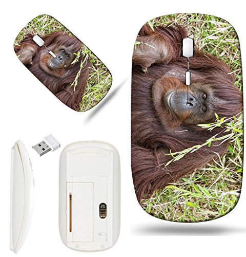 Luxlady Wireless Mouse White Base Travel 2.4G Wireless Mice with USB Receiver, 1000 DPI for notebook, pc, laptop, macdesign IMAGE ID: 32011941 orangutan portrait while looking at yuo ()
