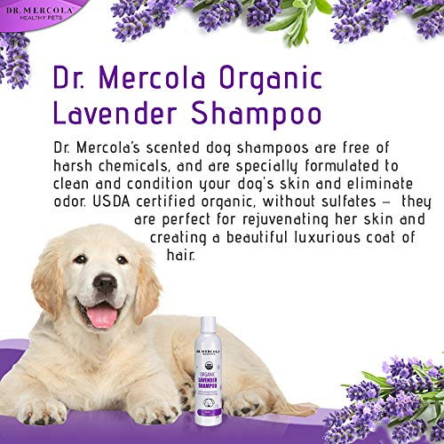 Image of Dr. Mercola Organic Lavender Dog Shampoo - 1 Bottle (8 oz) - Natural Dog Shampoo Promotes Healthy Hair & Skin - w/Lavender, Aloe Vera, Jojoba, Neem, and More - Helps Reduce Dog Odors