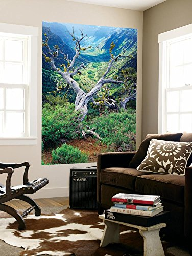 View Of Steens Mountain At Little Blitzen River Gorge  Oregon  Usa Wall Mural By Scott T  Smith 48 X 72In