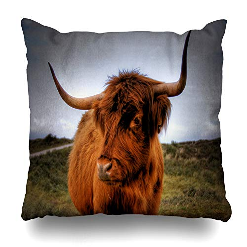 - ArTmall Throw Pillow Case Head Red Cow Scottish Highlander Wildlife Scotland Nature Brown Bull Angus Highland Beef Cattle Zippered Pillowcase Square Size 16 x 16 Inches Home Decor Cushion Covers