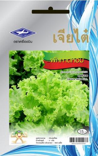 Amazon.com: Lechuga (960 semillas) semillas – 1 Paquete de ...