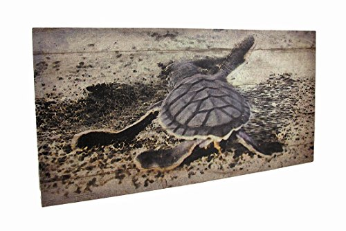 Zeckos Baby Sea Turtle Printed Canvas Wall - Mod Art Turtle Wall