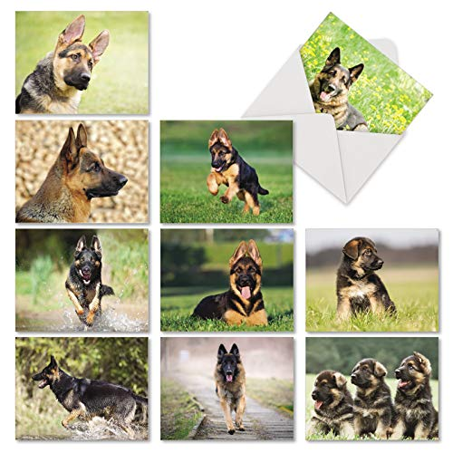 10 Gorgeous German Shepherds Note Cards - Assorted Blank Cards with Envelopes (Small 4 x 5.12 Inch) - Cute Puppy and Dog Stationery Greeting Cards - Boxed Animal Notecard Gift Set AM6828OCB-B1x10 ()
