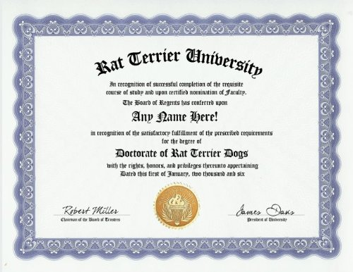 Rat Terrier Degree: Custom Gag Diploma Doctorate Certificate (Funny Customized Joke Gift - Novelty Item)