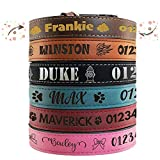 Personalized Leather Dog Collar | 3 Adjustable