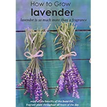 How to Grow lavender : lavender is so much more than a fragrance