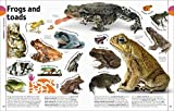 The Animal Book: A Visual Encyclopedia of Life on