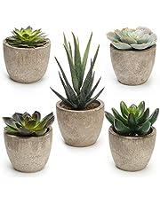 Artificial Succulent Plants 5 Pack, CoiTek Decorative Faux Succulent Potted Fake Cactus Grass Cacti Plants Pots (5 Pack)