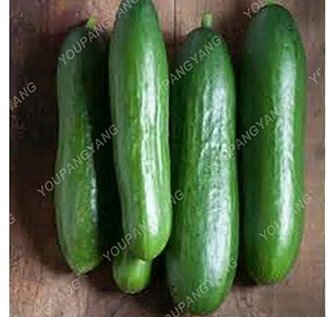 100pcs//bag cucumber seeds mini cucumber organic fruit seeds vegetables