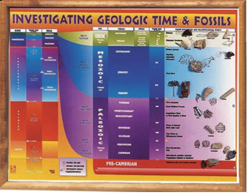 - American Educational Investigating Geological Time and Fossils Chart Transparency