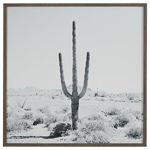 Modern Black and White Desert Cactus Photo on Wood, Grey Frame, 30'' x 30'' by Stone & Beam
