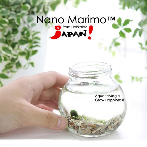 6-nano-luffy-marimo-balls-create-an-indoor-or-outdoor-diy-hanging-garden-with-just-any-bottle-adorab