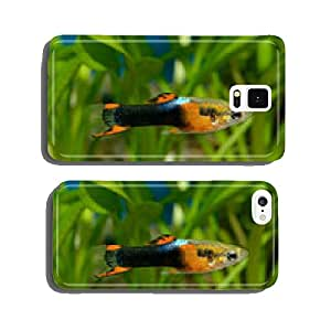 Guppy fish cell phone cover case iPhone6
