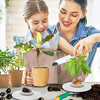 GORNORVA Avocado Tree Growing Bowl, Avocado Planting Seed Germinator Bowl Garden Seed Starter Gift for Women Grow Avocado Plant IndoorKitchen Garden Seed Starter Gift (Seeds & Plants NOT Included): Garden & Outdoor